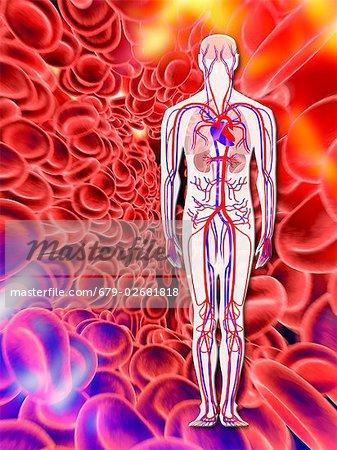Menschlichen Kreislaufsystems und rote Blutkörperchen, Computer ...