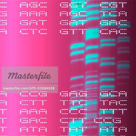 DNA-Autoradiogram und Codons, Bildmaterial. Autoradiograms zeigen die Reihenfolge der Nukleotide Basen (Grundbausteine) in einer Probe von DNA (Desoxyribonukleinsäure). Die Grundlagen werden als die Buchstaben A, C, G und T dargestellt und treten in Gruppen von drei, die Codons bezeichnet werden.
