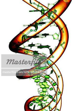 DNA molecule, conceptual computer artwork.