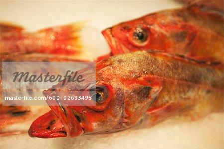 Red Snapper at Fish Market