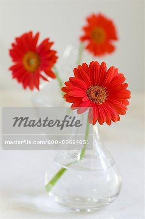 Vases avec des gerberas