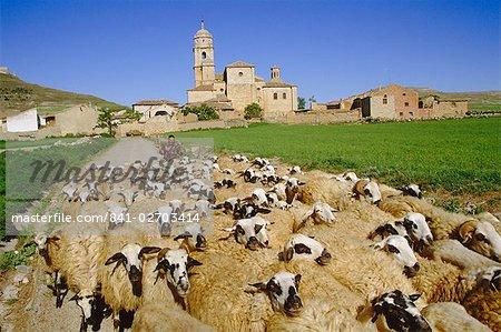 Bergers et troupeaux de moutons, Castrojeriz, Burgos, Castille et Leon (Vieille-Castille), Espagne, Europe
