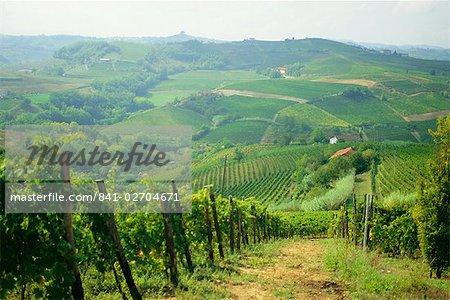 Typical landscape of vines in the Colli Piacentini, Piacenza, Emilia Romagna, Italy, Europe