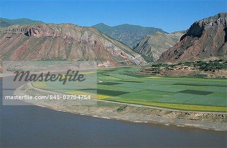 Champs de colza et l'orge par le fleuve jaune à Lajia, Province de Qinghai, Chine, Asie