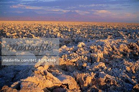 Atacama marais salants (Salar de Atacama), Chili, Amérique du Sud