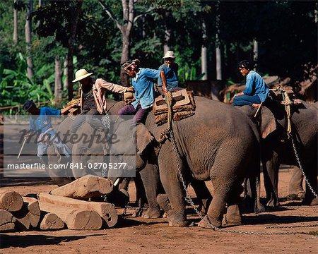 Éléphants au travaillent mobiles journaux à Chiang Mai, Thaïlande, Asie du sud-est, Asie