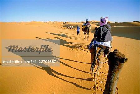 Dos de chameau dans les dunes du Sahara près de Merzouga, Maroc, Afrique du Nord