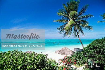 Découvre à travers les palmiers vers la plage et l'océan Indien, Jambiani, île de Zanzibar, Tanzanie, Afrique de l'est, Afrique