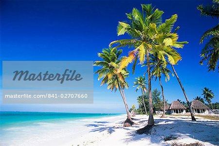 Palmiers, blanc de la plage de sable et l'océan Indien, Jambiani, île de Zanzibar, Tanzanie, Afrique de l'est, Afrique