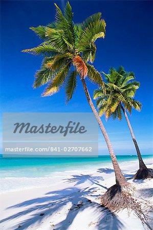 Palm tree, white sand beach and Indian Ocean, Jambiani, island of Zanzibar, Tanzania, East Africa, Africa