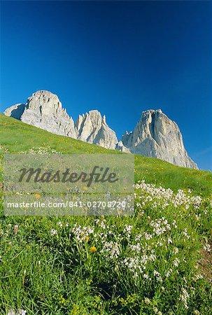 Willd fleurs et vue au Sasso Lungo (Langkofel), Dolomites, Trentinto-Haut-Adige, Italie, Europe