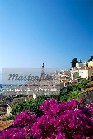 Bougainvilliers en fleur, Menton, Alpes-Maritimtes, Cote d'Azur, Provence, Côte d'Azur, France, Méditerranée, Europe