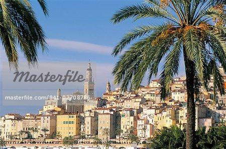Vieille ville entourée de palmiers, Menton, Alpes-Maritimes, Côte d'Azur, Provence, Côte d'Azur, France, Méditerranée, Europe