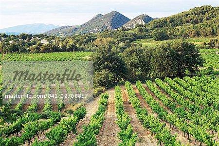 Vue village lointain à travers les vignes, Séguret, Vaucluse, Provence, France, Europe