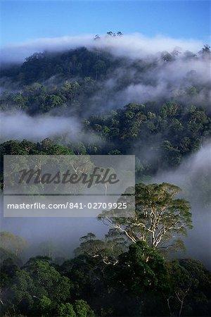 Vue aérienne de la canopée de diptérocarpacées vierge rainforest, zone de Conservation de la vallée de Danum, Sabah, Malaisie, île de Bornéo, l'Asie du sud-est, Asie