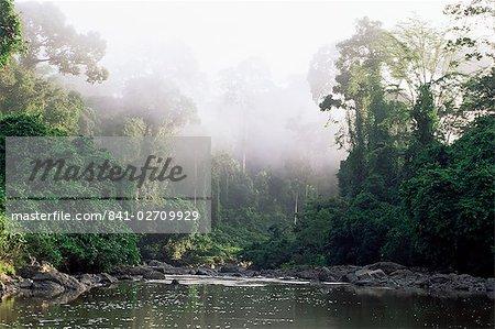 Forêt tropicale, la vallée de Danum, île de Sabah, en Malaisie, Bornéo, l'Asie du sud-est, Asie du