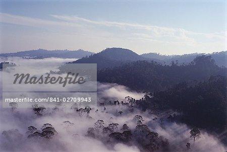 Brumes d'aube de compensation sur la forêt tropicale vierge diptérocarpacées, plus haut dans le monde, la vallée de Danum, Sabah, l'île de Bornéo, en Malaisie, Asie du sud-est, Asie