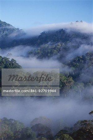 Dawn brouillard dans la forêt vierge de diptérocarpacées, plus haut dans le monde, la vallée de Danum, Sabah, l'île de Bornéo, en Malaisie, Asie du sud-est, Asie