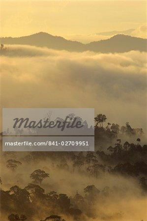 Daniel LECLERE silhouettes des arbres de la forêt tropicale, la vallée de Danum, Sabah, l'île de Bornéo, Malaisie