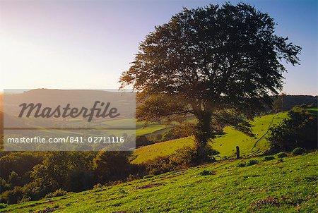 Devon, England, United Kingdom, Europe