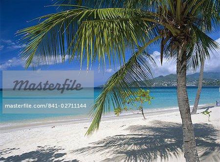 Palm tee and beach, Grand Anse beach, Grenada, Windward Islands, Caribbean, West Indies, Central America
