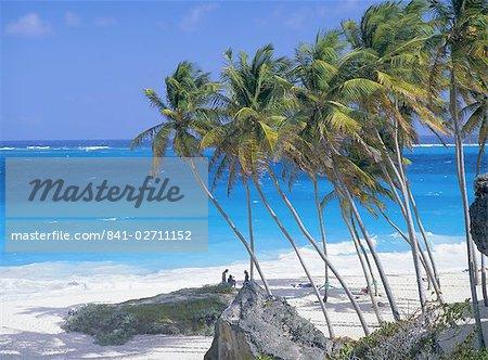 Palmiers et la plage, baie de bas, de la Barbade, Caraïbes, Antilles, Amérique centrale