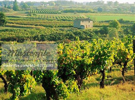 Vineyards, Provence, France, Europe