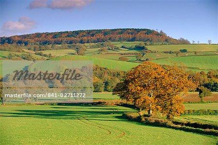 Campagne à l'automne dans la vallée de Otter, Devon, Angleterre, Royaume-Uni