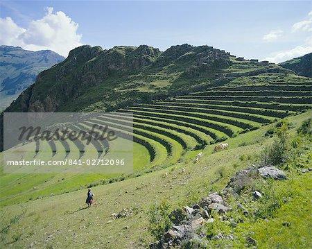 Terrasse Inca encore en usage, Pisac, près de Cuzco, au Pérou, en Amérique du Sud