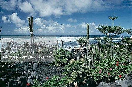 Garden by the Atlantic ocean, El Golfo, Lanzarote, Canary Islands, Spain, Europe