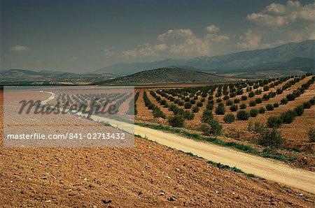Paysage d'oliviers, près de Jaen, Andalousie, Espagne, Europe