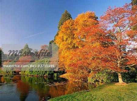 Acer Bäume im Herbst, Sheffield Park, Sussex, England, Vereinigtes Königreich, Europa