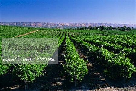 McLaren Vale-Oliverhill Wines vineyards, South Australia, Australia