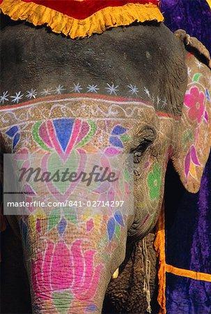 Decorated elephant, Rajasthan, India