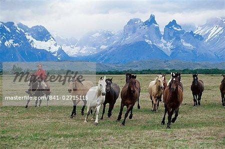 Un groupe de gauchos à cheval, avec les montagnes Cuernos del Paine (cornes de Paine) derrière, le Parc National de Torres del Paine, Patagonie, au Chili, en Amérique du Sud