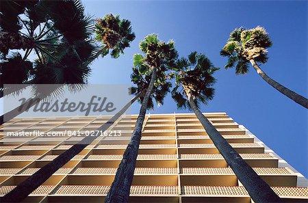 Palm arbres et Hyatt Hotel, Sunset Boulevard, Hollywood, Los Angeles, Californie, États-Unis d'Amérique, Amérique du Nord