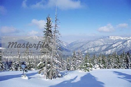 La neige couvertes de pins forme un motif régulier le long d'un sentier Demanovska vallée, Basses Tatras, Slovaquie, Europe