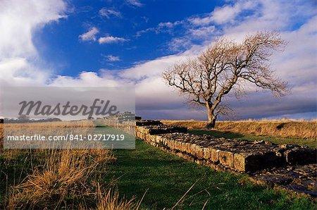 Black Carts, Roman Wall, Hadrian's Wall, UNESCO World Heritage Site, Northumberland (Northumbria), England, United Kingdom, Europe