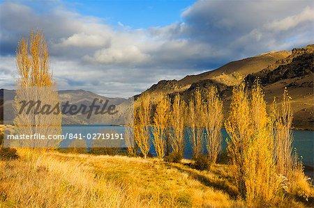 Peupliers et Lake Dunstan, Cromwell, Central Otago, Île du Sud, Nouvelle-Zélande, Pacifique
