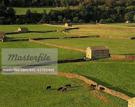 Clos champs et Grange près de Gunnister, Parc National de Yorkshire Dales, Yorkshire, Angleterre, Royaume-Uni, Europe