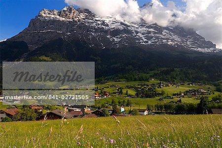 Printemps pré de fleurs alpines et chalets, Grindelwald, Berne, Suisse, Europe