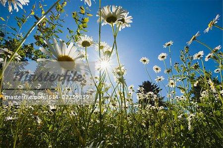 Fleurs en plein soleil