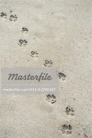 Empreintes de patte sur le sable