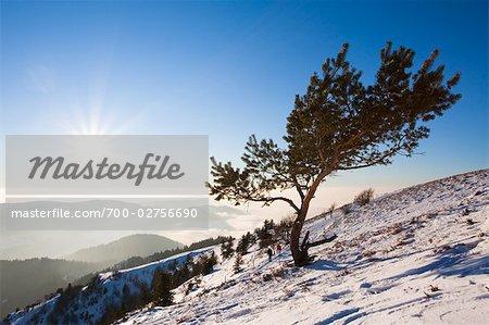 Paar Wandern bis Mount Belchen im Winter, Schwarzwald, Baden-Württemberg, Deutschland