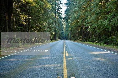 Route 199 à travers parc d'état Jedediah Smith, nord de la Californie, California, USA