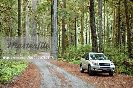 Garé la voiture sur 199 Old Plank Road, parc d'état Jedediah Smith, séquoia Redwood Forest, Californie, Etats-Unis