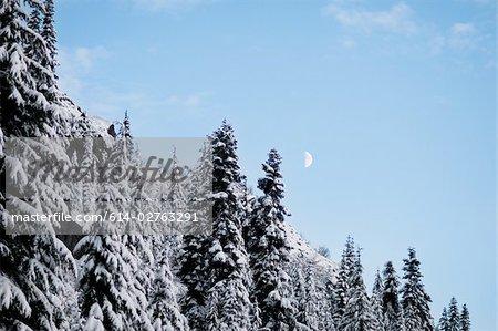 Forêt d'hiver et de la lune