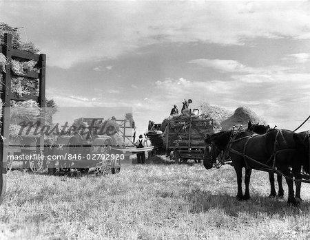AVOINE RÉCOLTE DES ANNÉES 1940 DE LAURIER MONTANA CHEVAUX WAGONS OUVRIERS AGRICOLES TRAVAILLEURS MACHINES RÉCOLTER LES AGRICULTEURS RÉCOLTENT GRAIN FOIN PAILLE HOMMES CROP