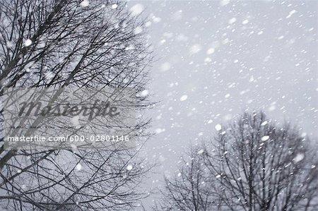 Schneebericht fallende und nackten Bäume