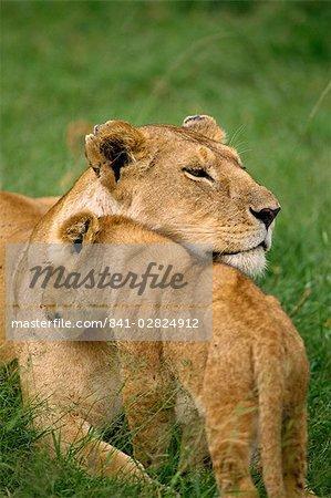 Lionne et cub, réserve nationale de Masai Mara, Kenya, Afrique de l'est, Afrique
